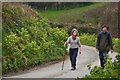 SS2427 : Torridge : Country Lane by Lewis Clarke