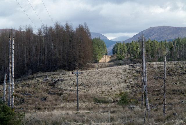 Power transmission lines passing through plantation