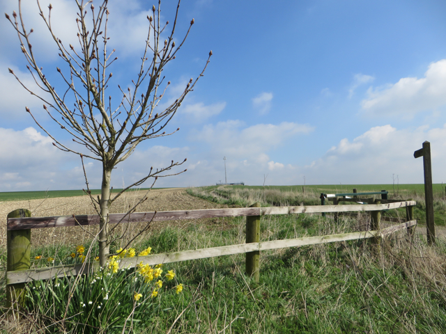 By Middlegate Lane, near Worlaby