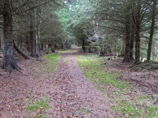 Track through Poundler's Wood