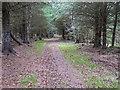 NJ3263 : Track through Poundler's Wood by valenta