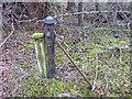 NJ3263 : Old railway fence strainer post by valenta