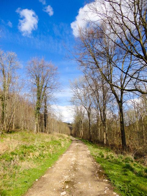 Pickering Wood