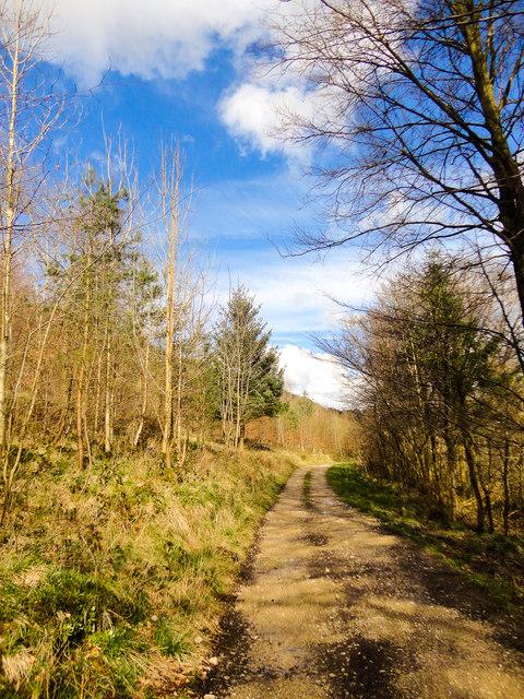 Pickering Wood, Duchy of Lancaster