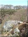 SE1239 : Millstone grit, Shipley Glen by Christine Johnstone