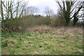 SK5020 : Clearing in scrub area on north side of Pear Tree Lane by Roger Templeman