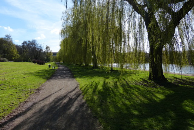 Willow trees on the Embankment in Peterborough