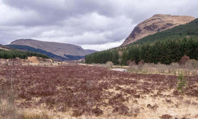 Scrubland in Glen Lochy