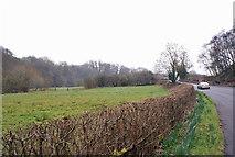 SJ8860 : Valley of Biddulph Brook by Richard Dorrell