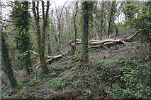SS5288 : Collapsed tree above Nicholaston Burrows by Bill Boaden