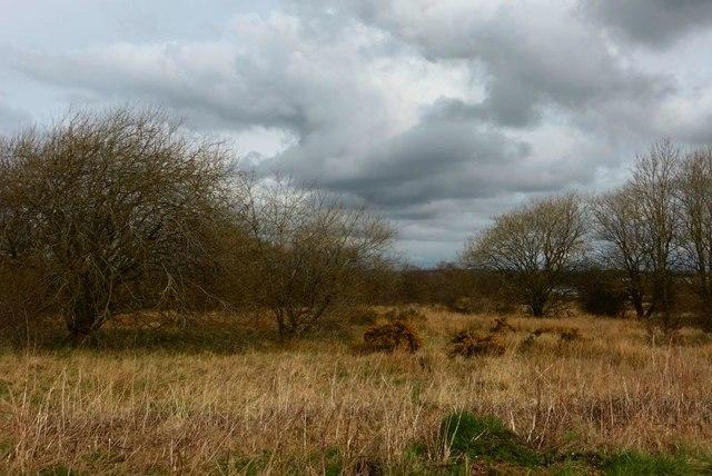 Scrubland, Newkayes Road