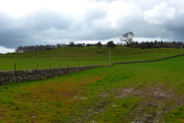 Drystane dyke and pasture
