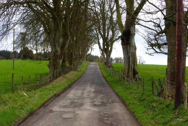 Towards Greenhead
