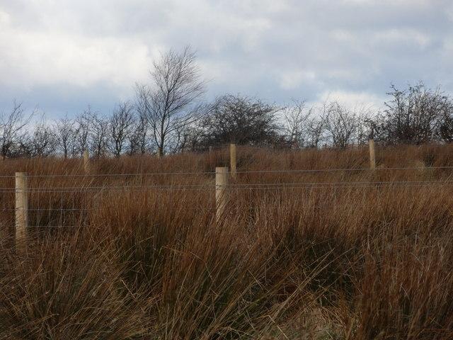 Marsh at Burdon Moor