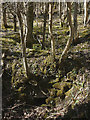 SD4880 : Possible ruined lime kiln, woods west of Haverbrack by Karl and Ali