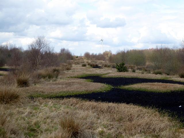 Peatlands near Lough Boora