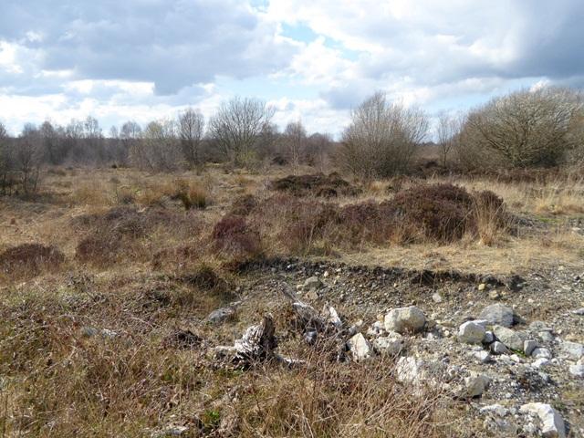 Scrub on the peatland near Turraun