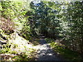 NY2328 : Path in Longside Wood by Anthony Foster
