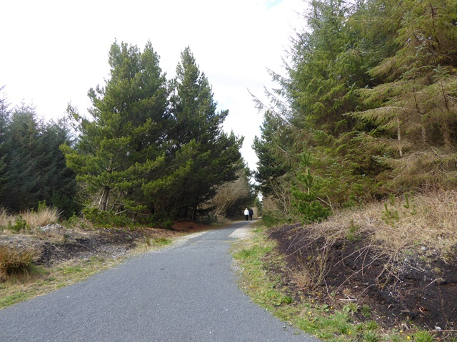 Cycle and foot path in the Lough Boora Discovery Park