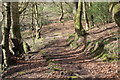 ST1899 : Woodland steps to Nant Grwhay, below Grwhay by M J Roscoe