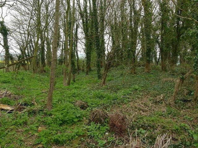 Earthwork in Morcott Spinney