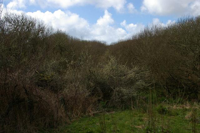 Wooded wetland, Loe Valley