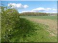 TQ6551 : Field alongside Maidstone Road by Marathon