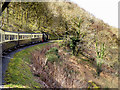 SN7277 : Vale of Rheidol Railway, Curve near Rhiwfron by David Dixon