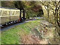 SN7177 : Vale of Rheidol Railway by David Dixon