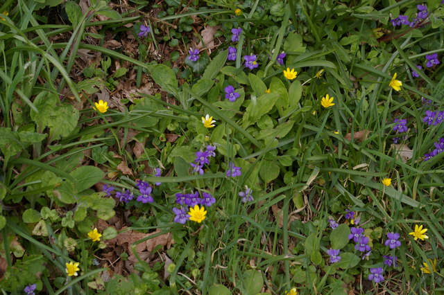 Spring flowers at Sycamore Grove, Penrose