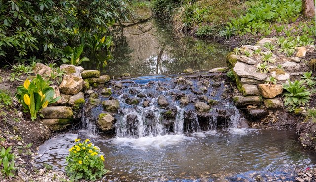 Minterne Gardens: Exotic plants by a small weir