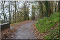 SX4552 : South West Coast Path by N Chadwick