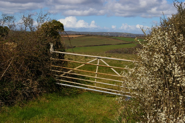 Blossom and gate on the track from Chyvarloe to Loe Bar