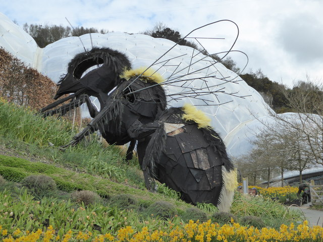 Pollinating bee at the Eden Project