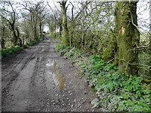 H5664 : Lane, Radergan by Kenneth  Allen