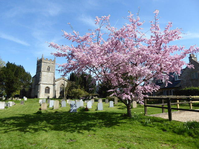 Cherry tree in flower, St. Leonard's churchyard, Upper Minety