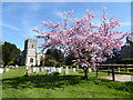 SU0091 : Cherry tree in flower, St. Leonard's churchyard, Upper Minety by Vieve Forward