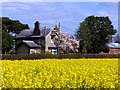 SD3201 : Cottage Farm and rapeseed (Brassica napus) by Norman Caesar