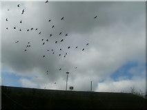 SE1431 : Pigeons circling Great Horton Tesco by JOHN