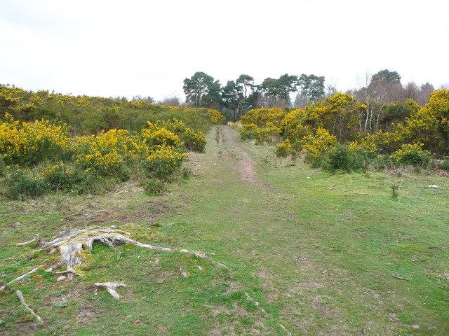 Bridleway on Lympstone Common