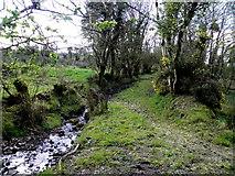 H5173 : Stream, Killycurragh by Kenneth  Allen