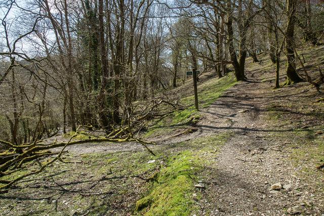 Bridleway to West Down
