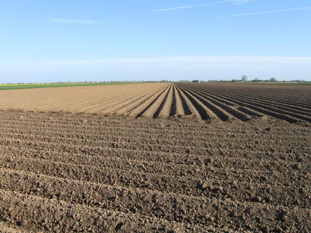 Freshly ridged field