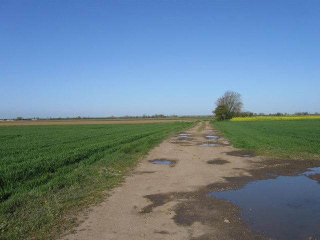 Track off Cheal lane