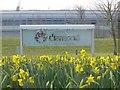 SU4786 : Diamond & Daffodils by Bill Nicholls