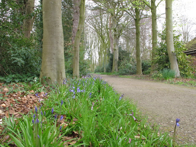 Bluebells, Rufford Old Hall garden