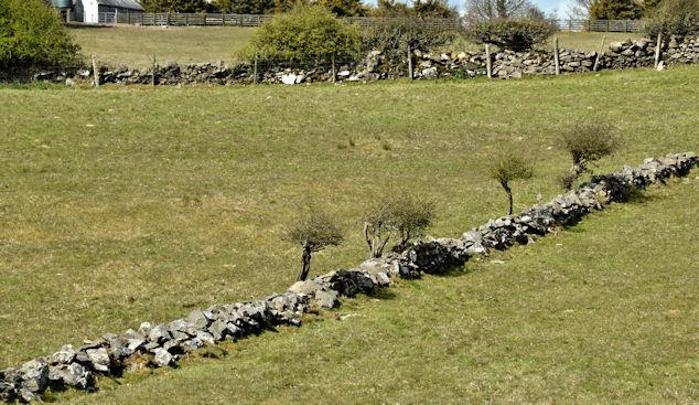 Drystone walls, Saintfield - April 2016(2)