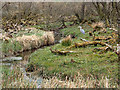 SD8867 : Heron at Tarn Moss by Mick Garratt