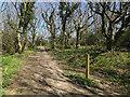 TG2739 : England Coast Path through Trimingham Wood by Hugh Venables