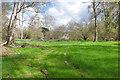 SU9354 : Coppiced wood near Pirbright by Alan Hunt
